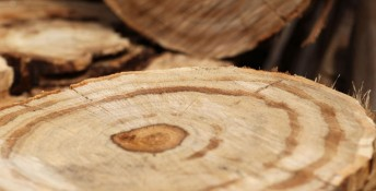 natural texture saw cut on a wooden beam, Image: 246182899, License: Royalty-free, Restrictions: , Model Release: no, Credit line: Profimedia, Stock Budget