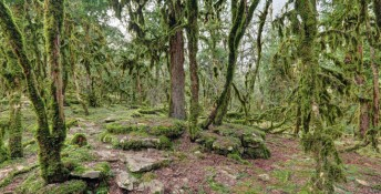 Krasnodar region, Russia. Sochi National Park in Western Caucasus, near the city of Sochi. Boxwood moss-covered forest in the river valley Psakho, Image: 272936128, License: Royalty-free, Restrictions: , Model Release: no, Credit line: Profimedia, Stock Budget