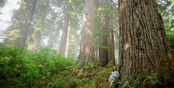 Redwood Forest, Image: 192756550, License: Royalty-free, Restrictions: , Model Release: yes, Credit line: Profimedia, Aurora Open