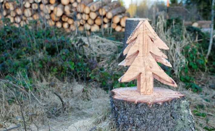 Tannenbaum ausgesägt aus dem Baumstumpf,  Christmas tree sawn out from the stump,, Image: 227796410, License: Royalty-free, Restrictions: , Model Release: no, Credit line: Profimedia, Alamy